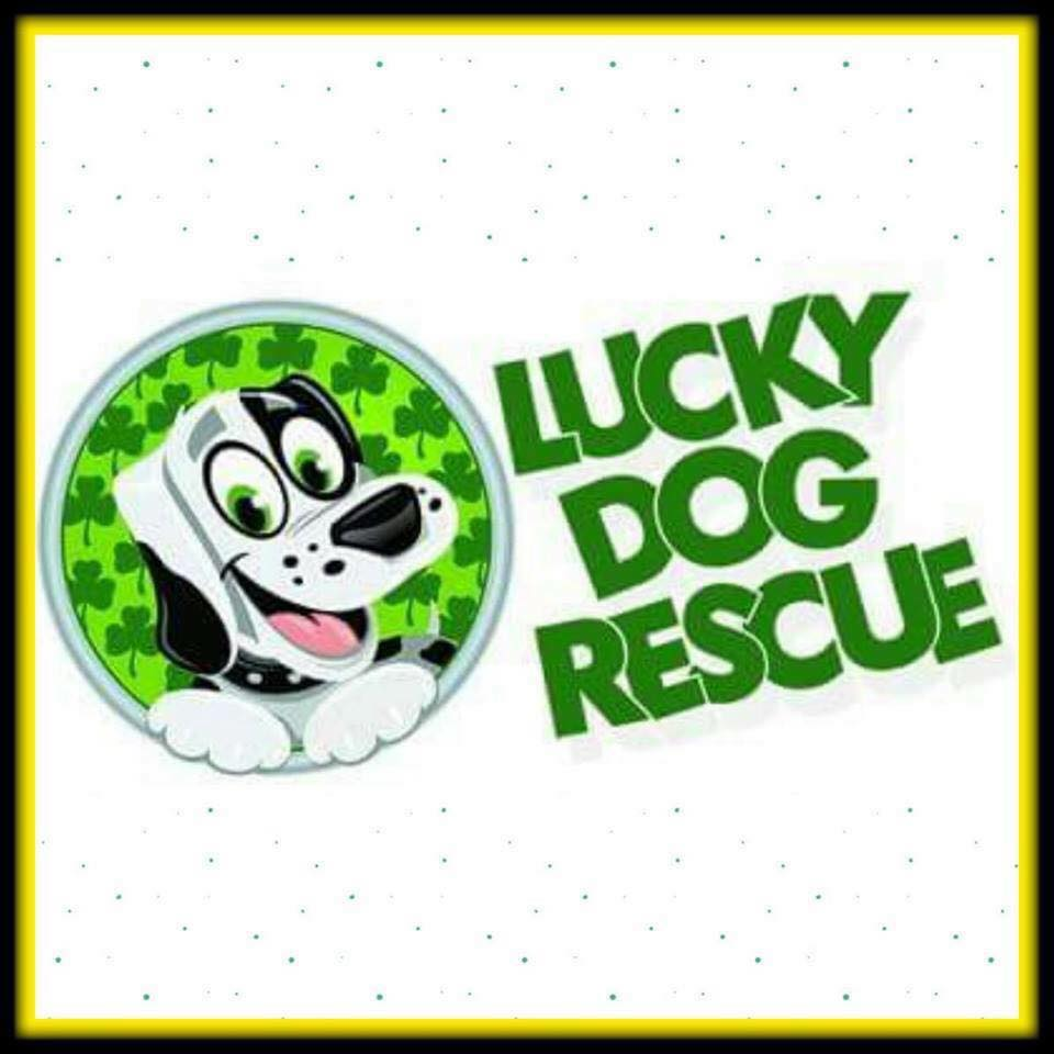 Lucky Dog Rescue, Scottsdale AZ